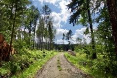 Les u Vlachova Březí